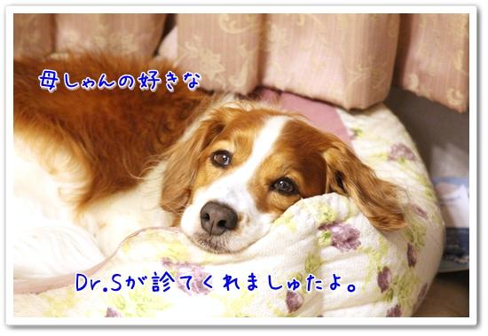 d0013149_1332866.jpg
