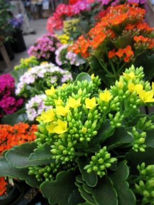 季節のお花_c0141652_13202688.jpg