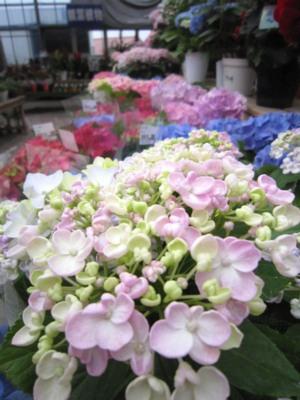 季節のお花_c0141652_13203237.jpg
