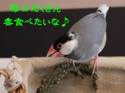 b0158061_21361640.jpg