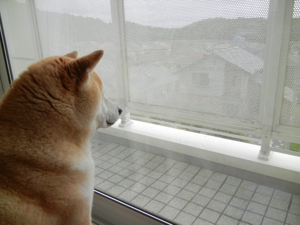 2012年5月2日(水)待つ女と要求する女!_f0060461_15562438.jpg