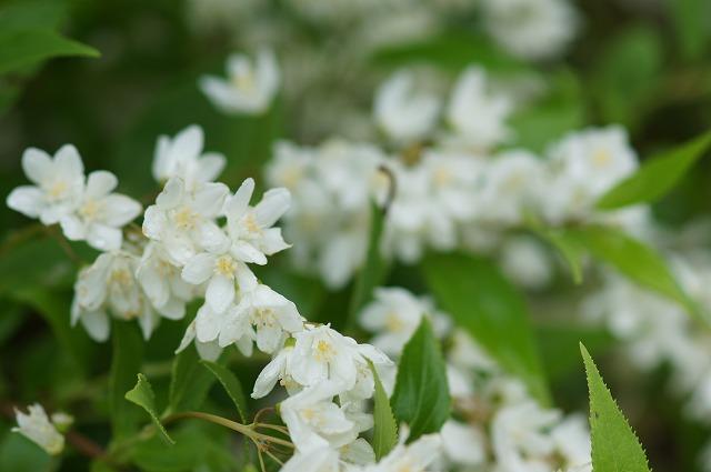 ふたたび白い花たち_e0181373_21134253.jpg