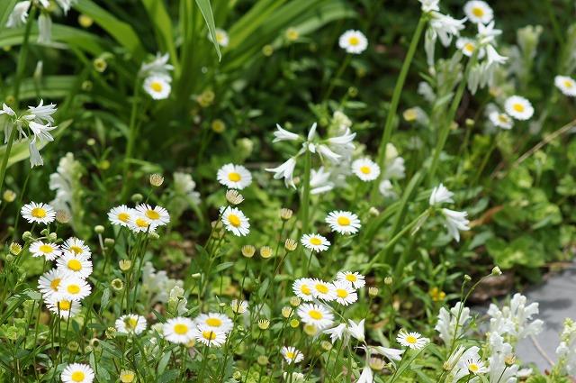 ふたたび白い花たち_e0181373_21171299.jpg
