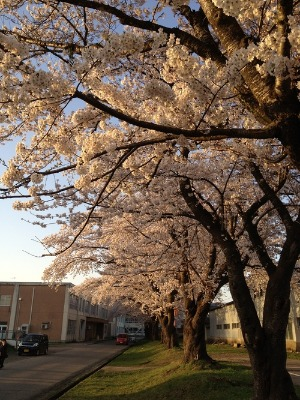KONY'S SPRING VIEW(PHOTO COLLECTION 2012.4.28~5.2)_d0084478_2030815.jpg