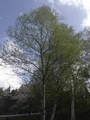 KONY'S SPRING VIEW(PHOTO COLLECTION 2012.4.28~5.2)_d0084478_21305229.jpg