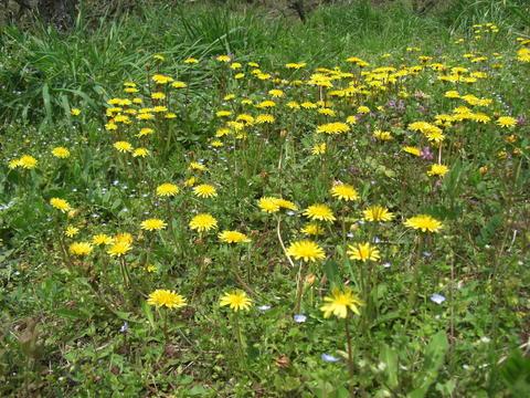 Awareness*春の庭で_d0167002_16215456.jpg