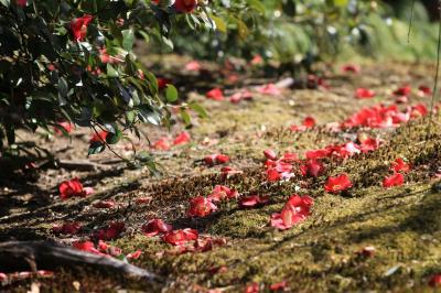 Awareness*春の庭で_d0167002_16242317.jpg