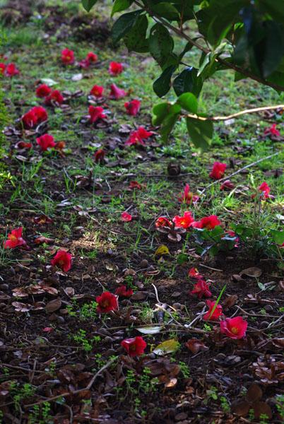 Awareness*春の庭で_d0167002_16254982.jpg