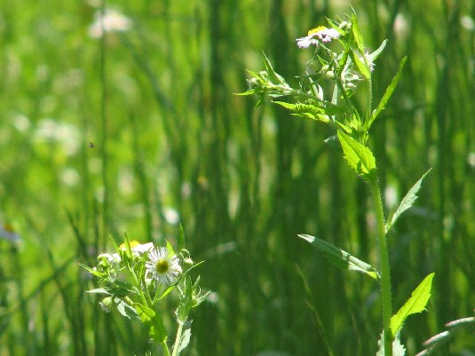 Awareness*春の庭で_d0167002_1632445.jpg