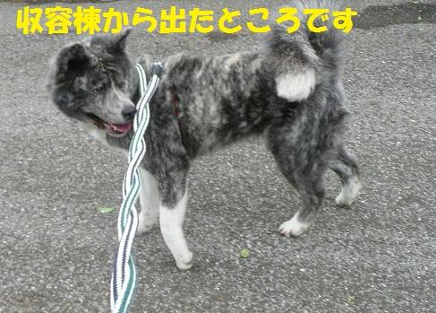 f0121712_733830.jpg