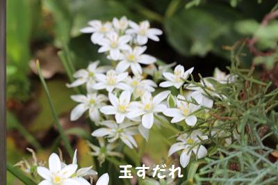 b0197418_16493837.jpg