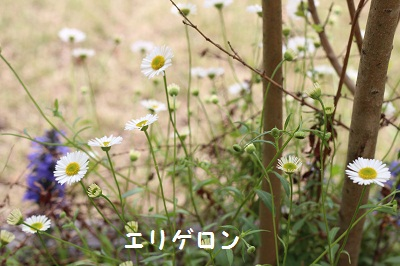 b0197418_1650518.jpg