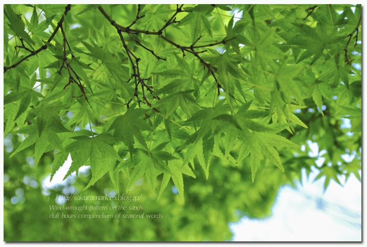 新緑の頃。_f0235723_1749251.jpg