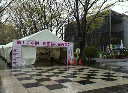 世田谷の花展覧会_f0001829_19331920.jpg
