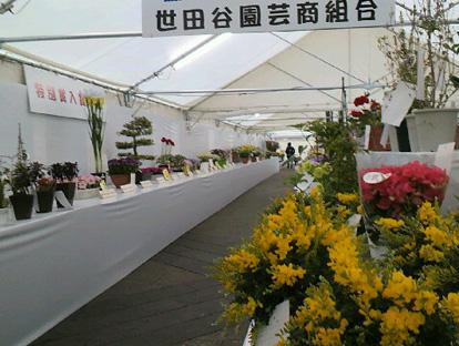 世田谷の花展覧会_f0001829_19352216.jpg