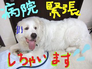 超大型犬の手術!_b0059154_145981.jpg