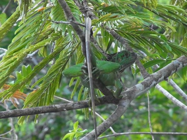 トルトゥゲーロ国立公園その4_b0109256_1101238.jpg
