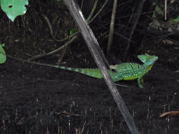 トルトゥゲーロ国立公園その4_b0109256_1102799.jpg