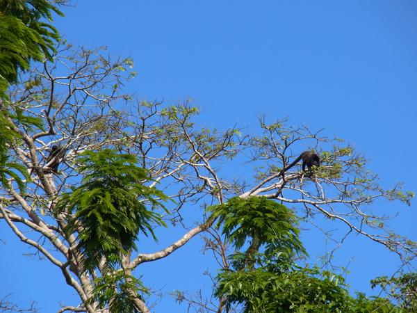 トルトゥゲーロ国立公園その4_b0109256_1114020.jpg
