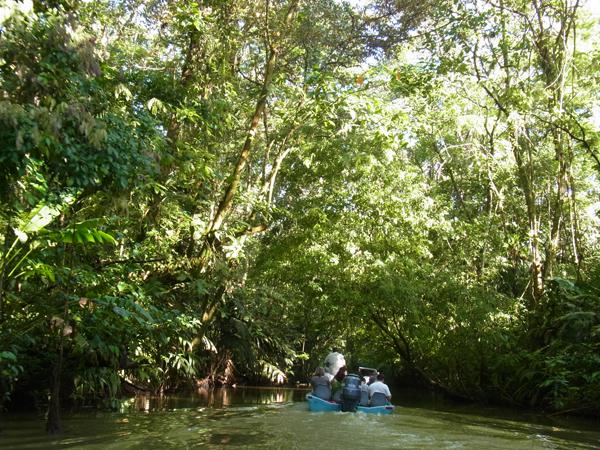 トルトゥゲーロ国立公園その4_b0109256_1121711.jpg