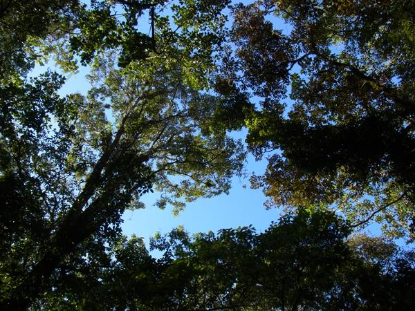 トルトゥゲーロ国立公園その4_b0109256_1122118.jpg
