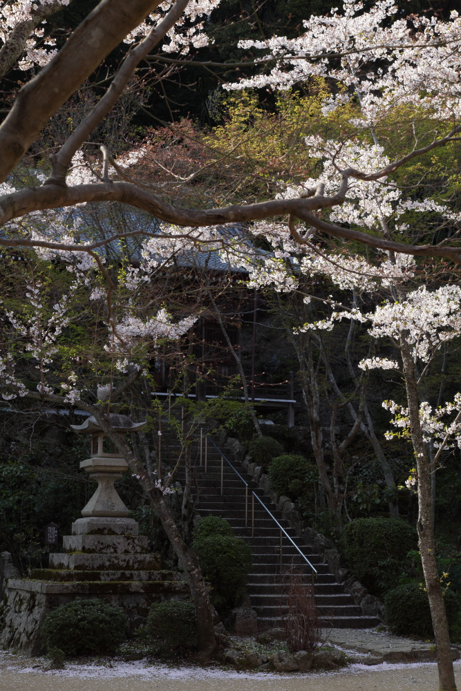 桜 2012  京都 <大原野>_f0021869_895225.jpg
