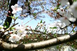 風街ろまん いい匂い 141 「うー釈迦釈迦メラ」 _c0121570_1545187.jpg