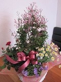 お祝いのお礼 ~3/18日まで。_e0252173_1655476.jpg