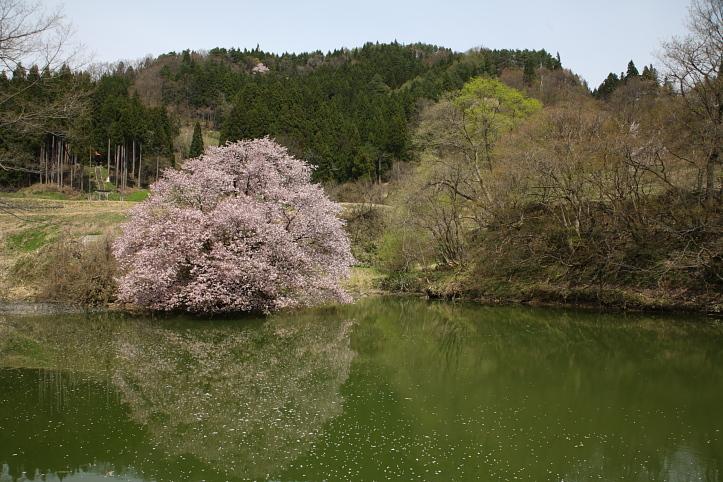 福島 桜巡り 喜多方市・山都 鏡桜 その1_e0165983_18284877.jpg