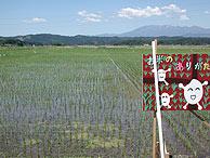 6月3日の田んぼ(緑が丘小・北郷小)_d0247484_22342163.jpg