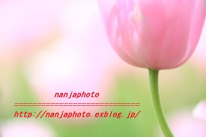 e0268999_2351996.jpg