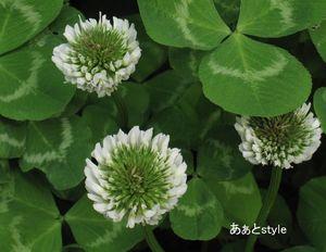 春 満喫♪_a0267202_14583883.jpg