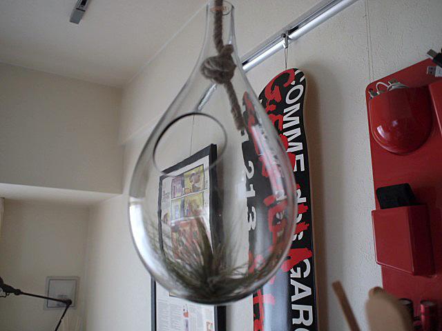 Bubble Terrarium_f0010106_18571674.jpg