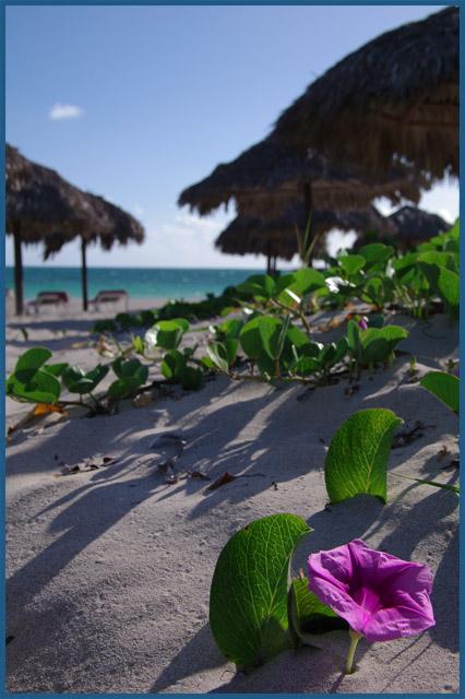 キューバの青い海と空_b0019313_17333538.jpg