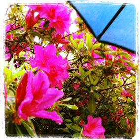 雨ふって地固まれ_a0133915_18403342.jpg