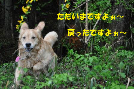 f0176830_1919521.jpg