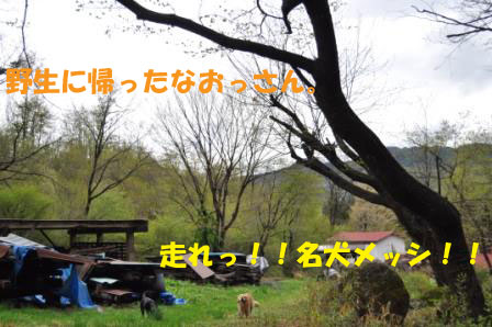 f0176830_1983117.jpg