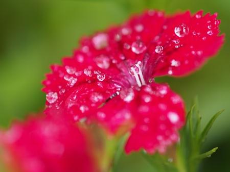 雨あがり_e0223337_1195630.jpg