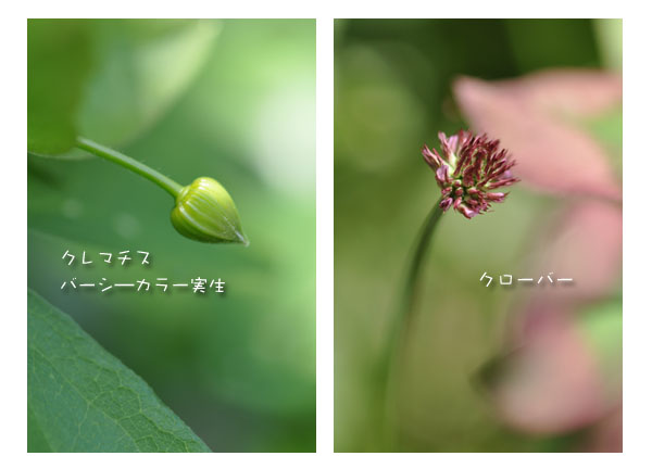 c0206051_1950656.jpg