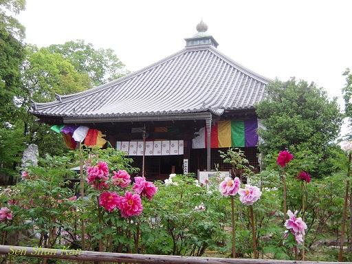 乙訓寺の牡丹 2012年5月3日_a0164068_0362765.jpg