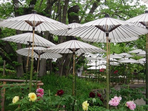 乙訓寺の牡丹 2012年5月3日_a0164068_0383761.jpg
