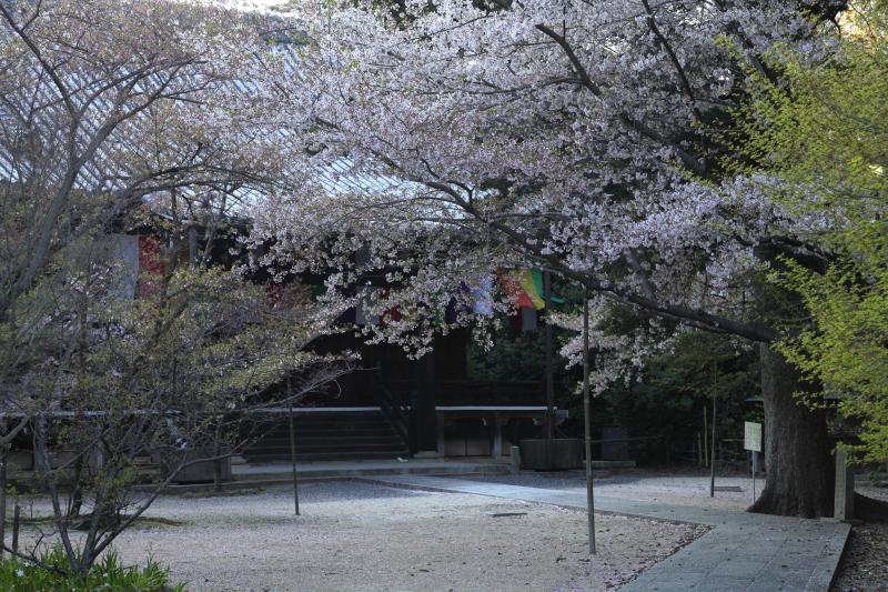 桜 2012  京都 <光明寺>_f0021869_0303438.jpg