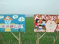 6月14日の田んぼ(緑が丘小・北郷小)_d0247484_2112476.jpg