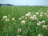 6月28日の田んぼ(緑が丘小・北郷小)_d0247484_22523986.jpg