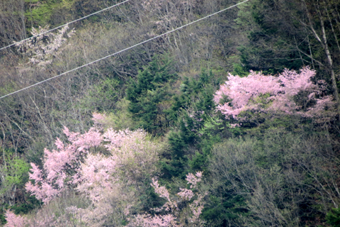 2012年5月4日(金) GW帰省その6_f0014893_16482854.jpg