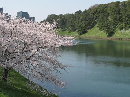 皇居外苑の桜&景色・・・2_c0075701_19242844.jpg