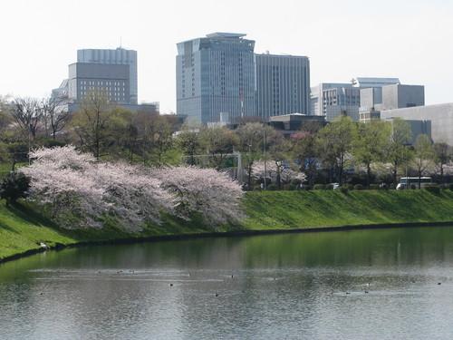 皇居外苑の桜&景色・・・2_c0075701_19244112.jpg