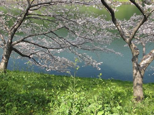 皇居外苑の桜&景色・・・3_c0075701_19304759.jpg