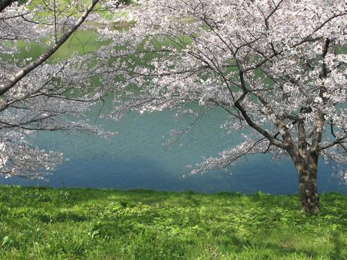 皇居外苑の桜&景色・・・3_c0075701_19304983.jpg