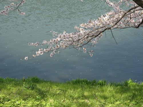 皇居外苑の桜&景色・・・3_c0075701_19305233.jpg